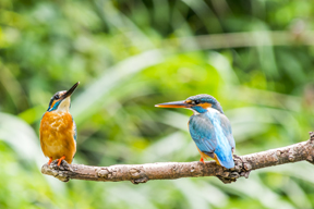vilka arter är hotade i sverige