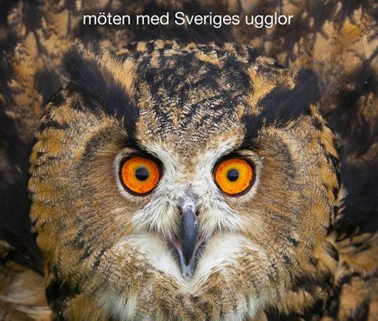 rösta på sveriges nya nationalfågel