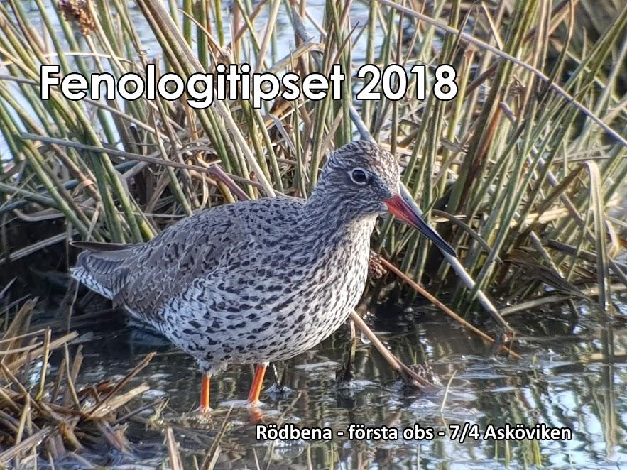 Fenologitips 2018 – rödbena