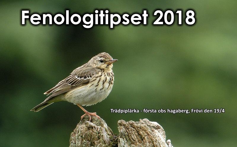 Fenologitips 2018 – trädpiplärka