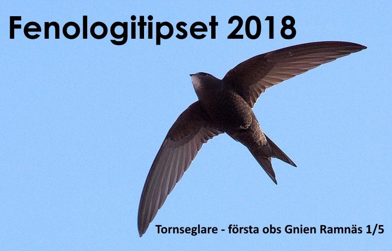Fenologitips 2018 – tornseglare
