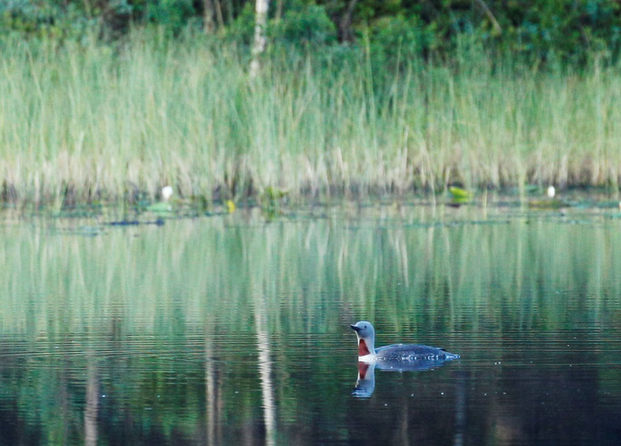 Reflektion. Foto: Kristina Eriksson