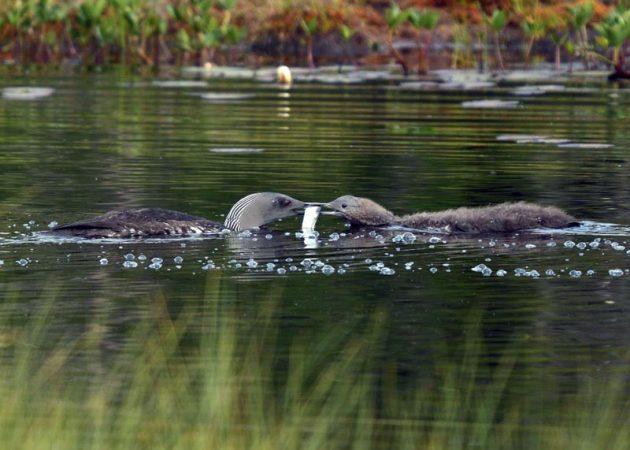 Matningsdags. Foto: Leif Strandberg