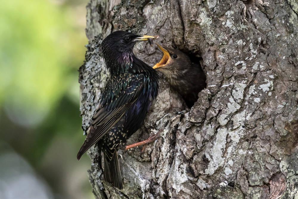 Dating fågel skådare