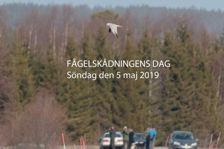 Fågelskådningens dag